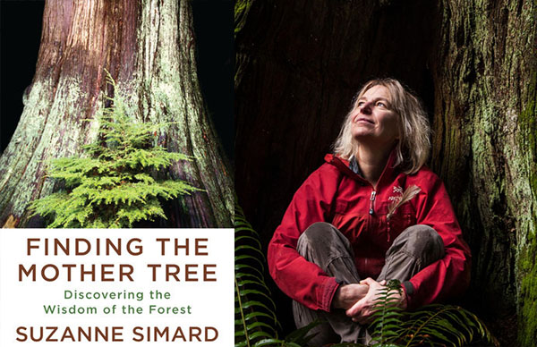 Suzanne Simard's <em>Finding the Mother Tree</em>